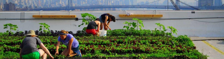 Agricultura Urbana. Brooklyn Grange Huerta Urbana