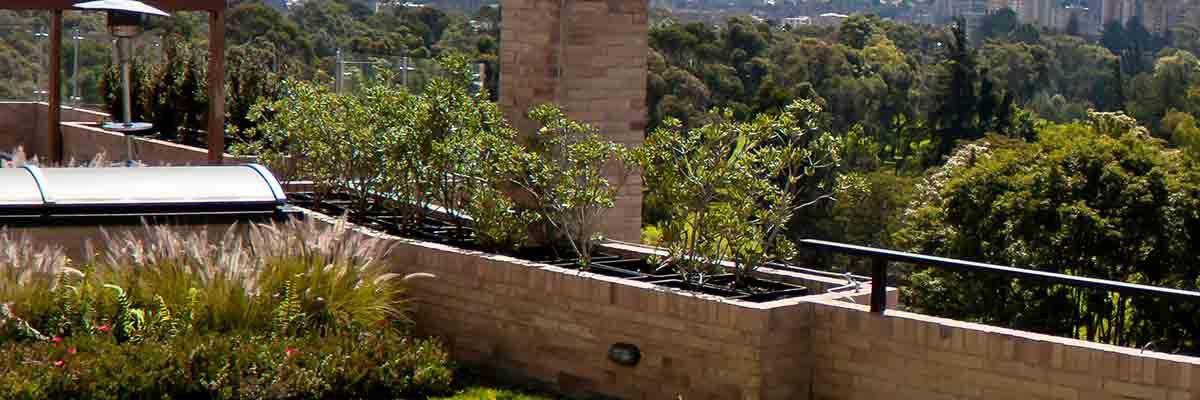 Terrazas Verdes Algo Más Que Una Simple Decoración Helecho