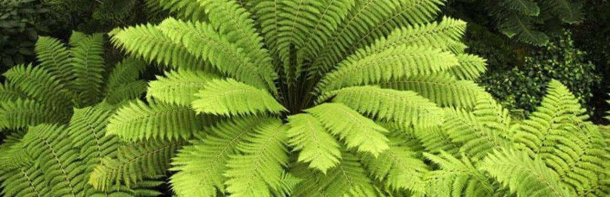 plantas para jardines verticales