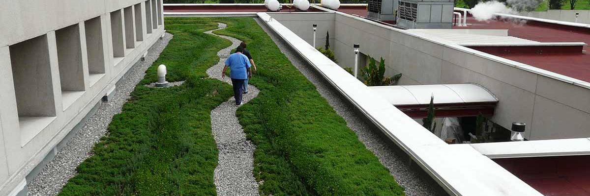 techo verde mexico