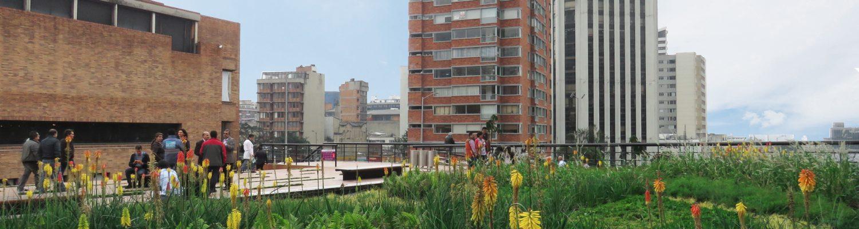 techos verdes Helecho